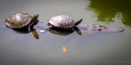 17_turtlescroc01