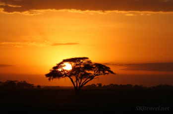 amboseli, african sunset, acacia