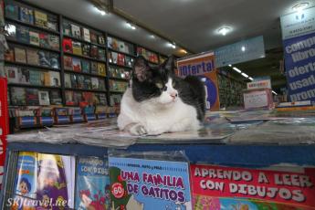 Argentina ba_cat