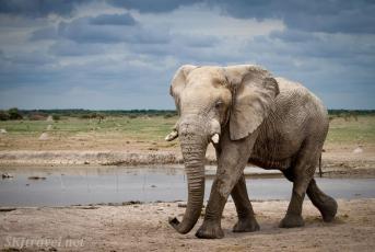 elephant walking, nxai pan