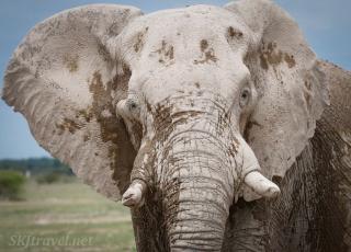 elephant in mud, nxai pan
