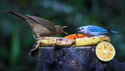 CR_birds_birdconversation