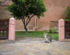 Cat_saadian tombs 5