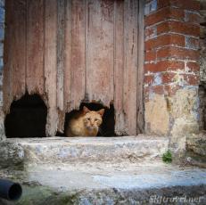 Greece kittyMesta02