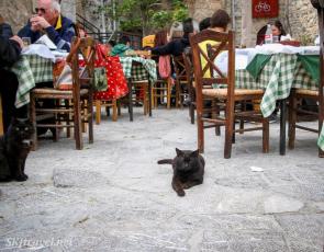 Greece kittyMesta03
