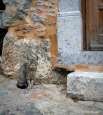 Greece kittyMesta_14