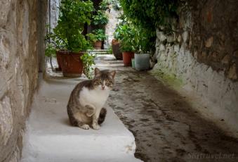 Greece kittyMesta_paw2