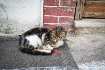 Greece kittyPyrgi_03