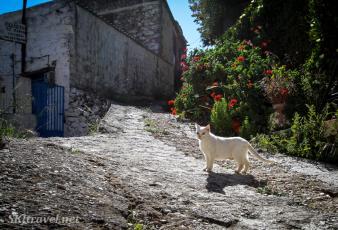 Greece kittyVolissos_01