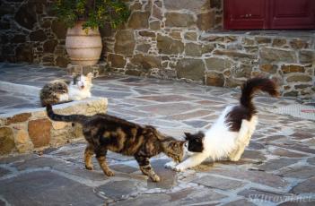 Greece kittyVolissos_02