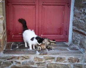 Greece kittyVolissos_03