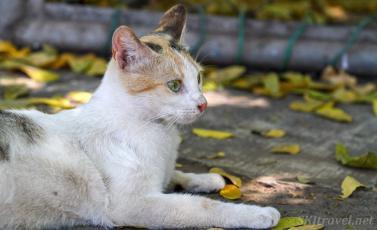 Mexico kitty06