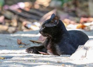 Mexico kitty2