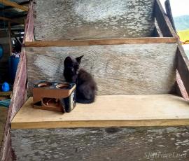 Panama daytrip_kitty_misi kitten