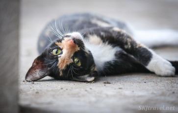 Panama kitty_04