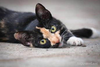 Panama village_kitty_06