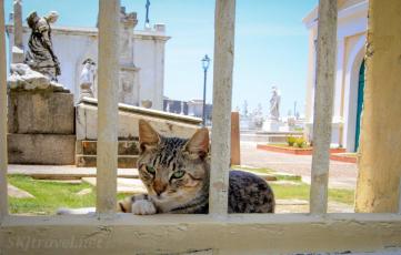 PuertoRico PR_osj_kittycemetery