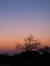 african sunset, khwai concessions