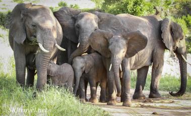 Tarangire, elephant family