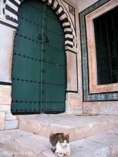 Tunisia tuniskitty