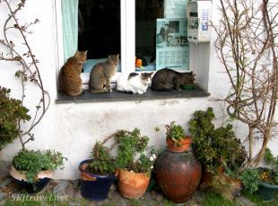 stray cats cadaques