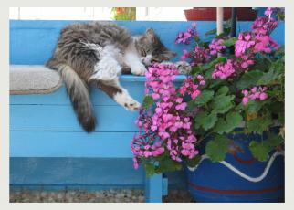 greekcat5x7