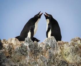 penguinLife_pair05