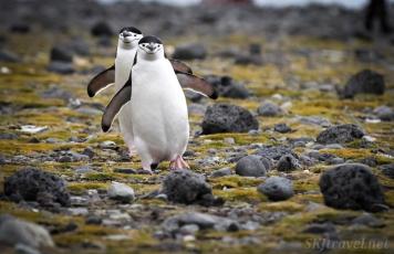 penguinLove_pair01