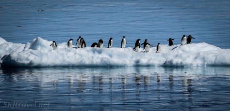 penguinSpring_02