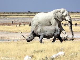 big five, african mammals