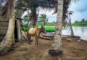 village01_saddled horse